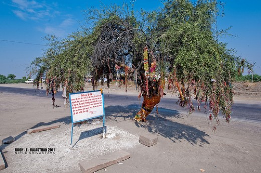 Tree which killed Om bann after his bullet collided in it.  Now the tree is covered with bangles and scarves as offerings.