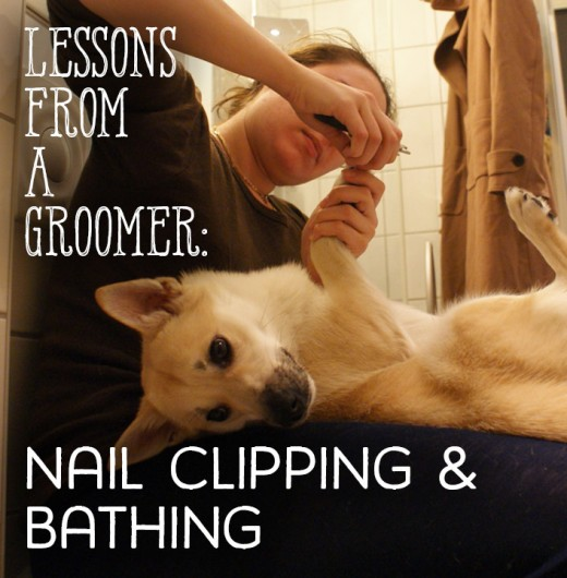 How to trim your dog's nails and give him or her a bath.