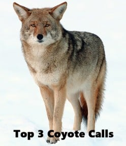 Coyote Hunting Gear: 3 Best Non-Electronic Predator Calls