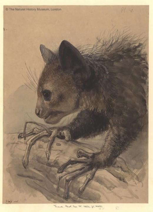 Author: Joseph Wolf (1820-1899)