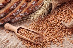 Nature of Pulses-Red Gram, Wheat