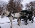The Carriage Driver² - Forever '51