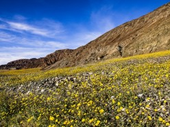 How to Plan a Vacation in the Beautiful Desert of Death Valley