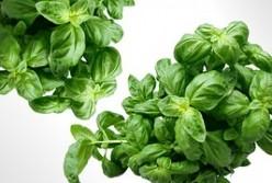Artisan DIY: Preserving Herbs