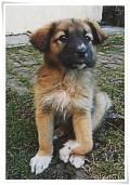 Carpal Flexural Deformity in Puppies