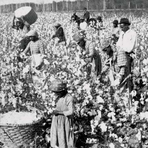 Slaves pick cotton in Georgia in the 19th century