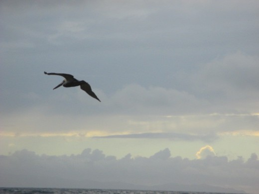 Wish I'd captured the three pelicans just before this one.
