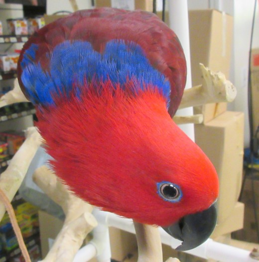 """Take a look at """"Parrot's beak""""!- Photo by George Sommers"""