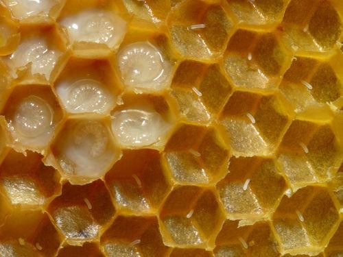 Natural Storage : Polagonal Shape; the Hexagon