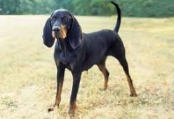 Dog Breeds 101.2- The Hound