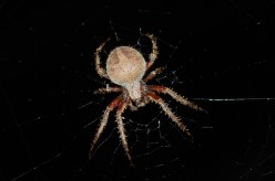 5 Best Tips To Prevent Spiders From Your Home