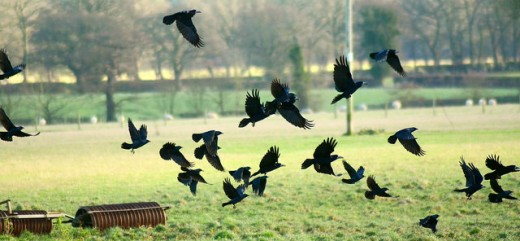 Foreshadow death with a murder of crows.