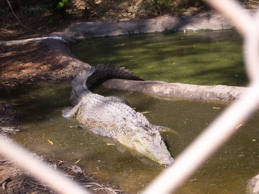 Malcolm Douglas Crocodile Park, Broome