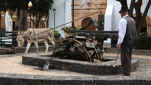 In the village of Pajara, a working waterwheel or 'noria' driven by donkey power is a local attraction. These historic wheels were once used to draw water up from a deep well