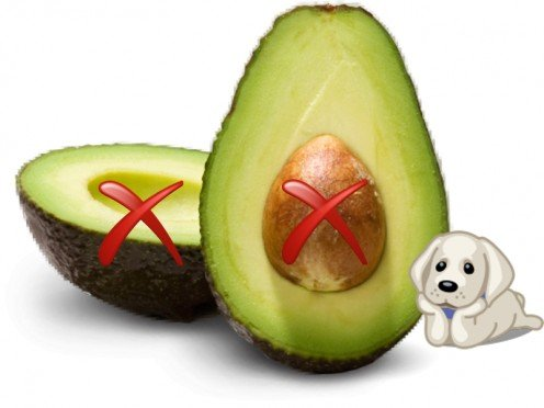 Avocado Is bad for your dog