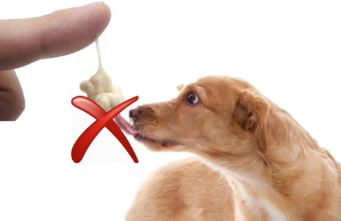 Chewing Gum is Dangerous for Dogs