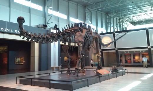 Tellus Science Museum - Apatosaurus