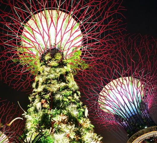 Super trees, close up