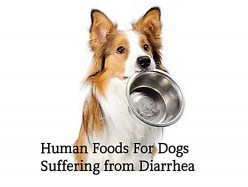10 Human Foods Good for Dogs With Diarrhea or Upset Stomach