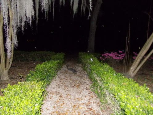 Walkway in Front of House with Orbs Present