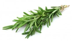 Herbs101: Rosemary