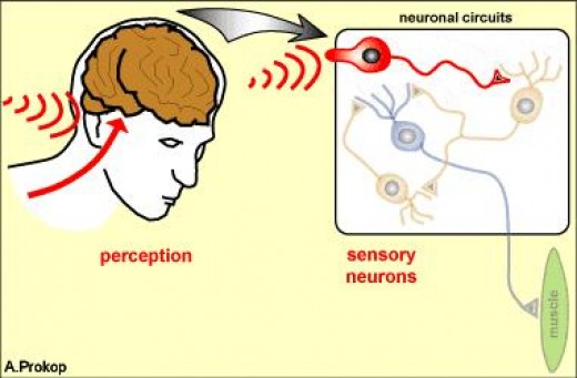 Stimulation of Acupuncture Points triggers a neurological response