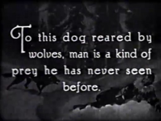 Image projected of Rin Tin Tin in one of the movies.
