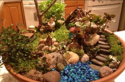 Fairy Gardens: Think Small and Use Your Imagination