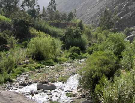River flowing downhill in maca growing area