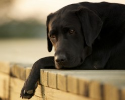 Spring Depression: a Myth or a Challenge for a Pet Owner?
