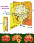 Basic Facts and Figure about Epilepsy and Seizures