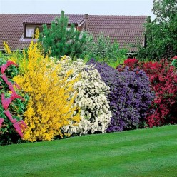 Flowering Shrubs Bring Beauty to Life