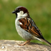 Sparrowlet profile image