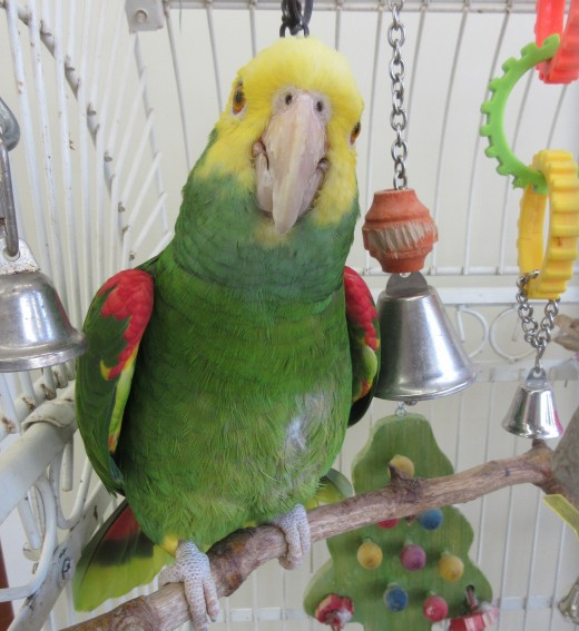 """Parrot's beak""? that name rings a bell. Or maybe it's just me ringing one of my bells. - Photo by George Sommers"