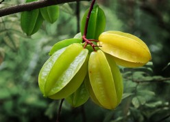 Reasons for eating Star Fruits
