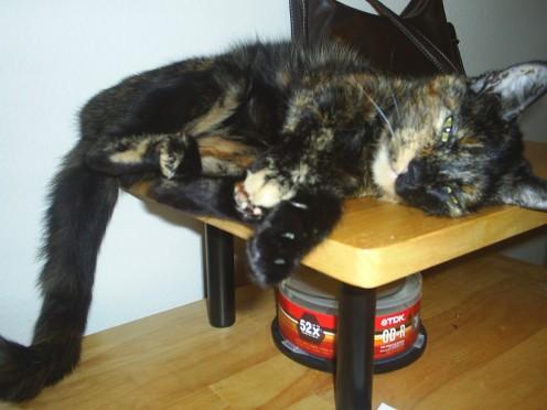 Diet Change in a Diabetic Cat