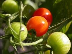 The 5 Best Vegetables To Grow In Your Garden