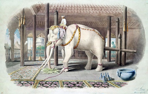White elephant in palace in 1885