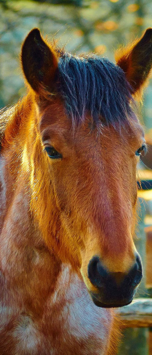 cool horse names - 520×1213