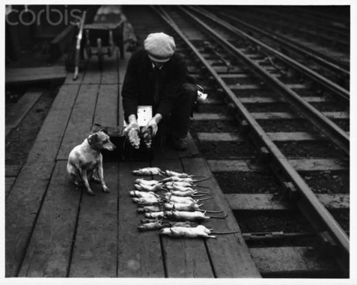 Rat catcher.  No joke. Photographed  Nov. 7 1939.