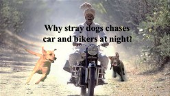 Why dogs chases car and bikers at nights?