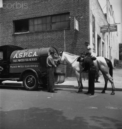 In an older time, the A.S.P.C.A. gives  horse a drink of water.  Besides Animal Control  employees, the A.S.P.C.A.  also helps with the welfare  of animals.