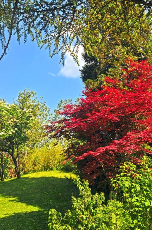 Japanese style foliage.