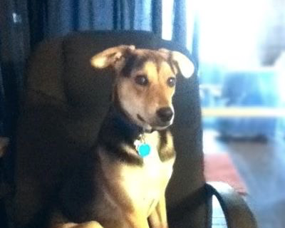 Here he is in his chair. This was my chair before he came. It's covered in his hair so he can sit there.