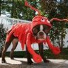 Lobster Dog profile image