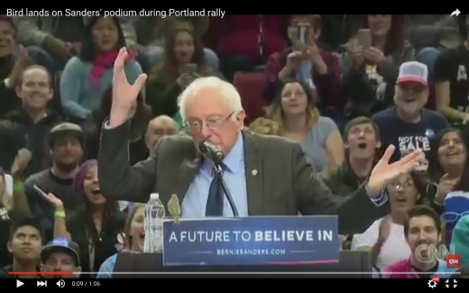 Bird lands on Bernie Sanders' podium during Portland rally.
