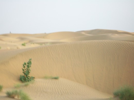 Enjoy your tour of Jaisalmer with the lovely royal Sand Dunes in Jaisalmer