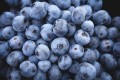 Blueberries - What Your Mother Didn't Tell You