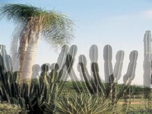3d images for polarized glasses