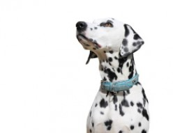 Factors to Consider Before Buying a Dog Collar
